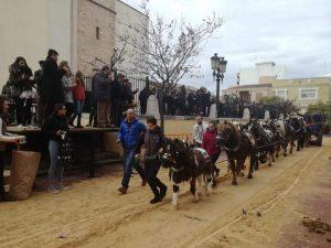 La Peña el Cavall y la Parroquia de San Miguel Arcangel han organizado la bendición de animales en Burjassot