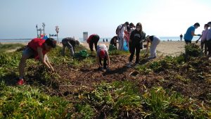 Els alumes de l' IES La Garrigosa de Meliana realitzen una jornada de voluntariat ambiental en la platja